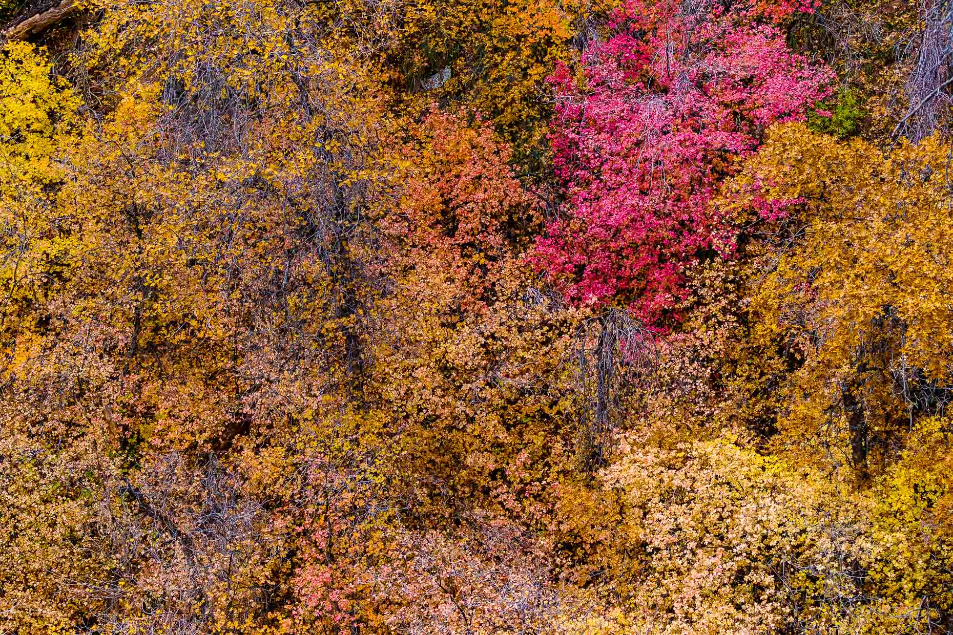 Zion, Fall Foliage, UT,  029_201211094187